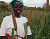 Patricia Matuku inspects her thriving pearl millet crops.