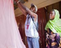 malaria net