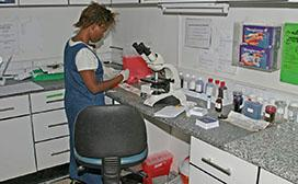 woman studying in lab